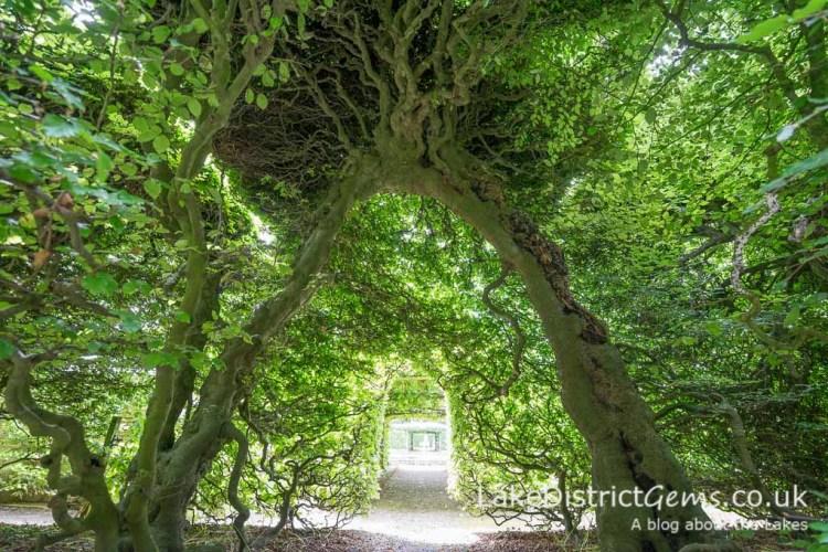 Inside the beech hedges