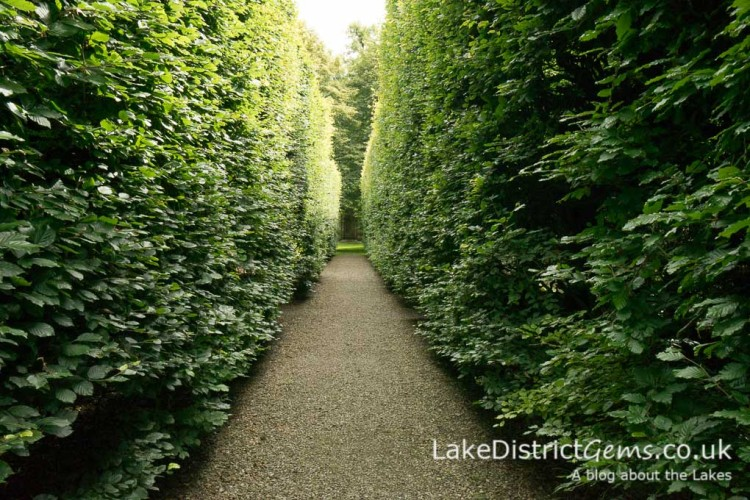Walking between the Beech hedges at Levens Hall