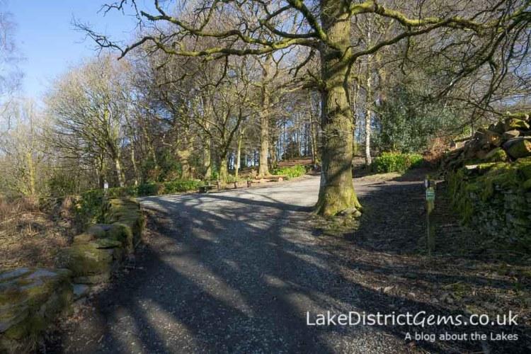 Orrest Head walk clearing