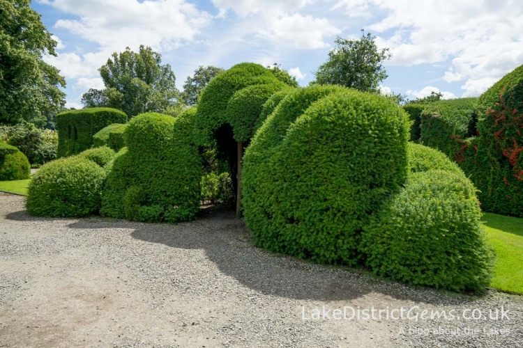 The Judge's Wig topiary at Levens Hall